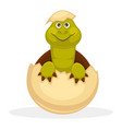 cute plump turtle that smiles just hatched from vector image