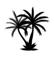 beautiful black and white palm tree leaf vector image vector image
