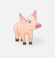 funny pig isolated on a light gray background vector image