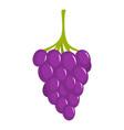 small grape icon cartoon style vector image vector image