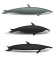 whale blue tale fish mockup set realistic style vector image