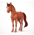 Beautiful brown horse with a star on his forehead vector image