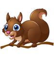 cartoon squirrel vector image vector image