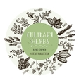 Hand drawn herbs collection vector image
