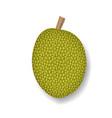 isolated jackfruit on white realistic vector image vector image