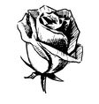 Rose bud sketch vector image vector image