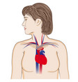 heart location in chest vector image vector image