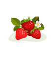 ripe strawberry with green leaves and blooming vector image