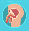 Diagram of the male reproductive system vector image vector image