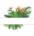 green fern and strelitzia reginae flower vector image
