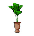 palm in a clay pot element home decor the vector image vector image