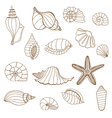 Sea shells Brown and white vector image