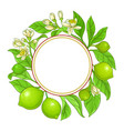lime branches frame on white background vector image vector image