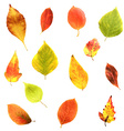 Big Set Leaves vector image vector image