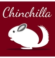 Chinchilla vector image vector image
