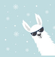christmas card with llama vector image vector image
