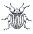 colorado potato beetle tattoo art potato bug vector image vector image