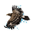 flying steppe eagle from a splash watercolor vector image vector image