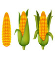 fresh corn vector image