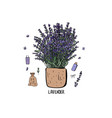 lavender set composition in doodle style vector image vector image