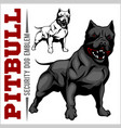 american pit bull terrier pitbull vector image vector image