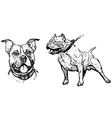 american pitbull terrier vector image vector image