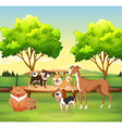 Different kind of pet in the park vector image vector image