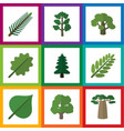 flat icon natural set of spruce leaves decoration vector image