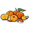 fresh tangerines vector image