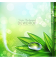 green background with leaves and dew drops vector image vector image