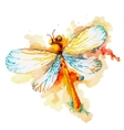 Orange Watercolor Dragonfly vector image vector image