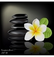 Flower Frangipani On Dark Background vector image