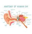 cartoon ear anatomy human sound sensory organ vector image