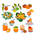 persimmon fresh fruity food salad dessert vector image