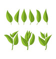 realistic 3d detailed green tea leaves set vector image vector image