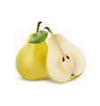 two yellow pears in modern realistic style vector image