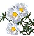 Beautiful Aster flower isolated on white vector image vector image