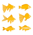 Goldfish set isolated on white background Yellow vector image vector image