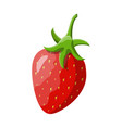 red berry strawberry isolated white vector image