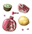 set fruits lemon garnet kiwi vector image