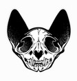 stylized monochrome patterned cat skull vector image