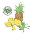 composition of whole and cut pineapple vector image