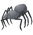 black spider on white background vector image