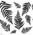 seamless pattern with black fern vector image vector image