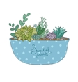 Succulents in pot Agave aloe and cactus vector image vector image