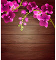 Pink Orchids on a Wooden Background vector image