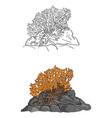 coral sketch doodle hand drawn vector image vector image