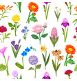 summer flowers for floral background and wrapping vector image vector image