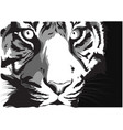 black and white sketch a tiger s face vector image