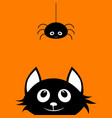 black cat and spider vector image vector image